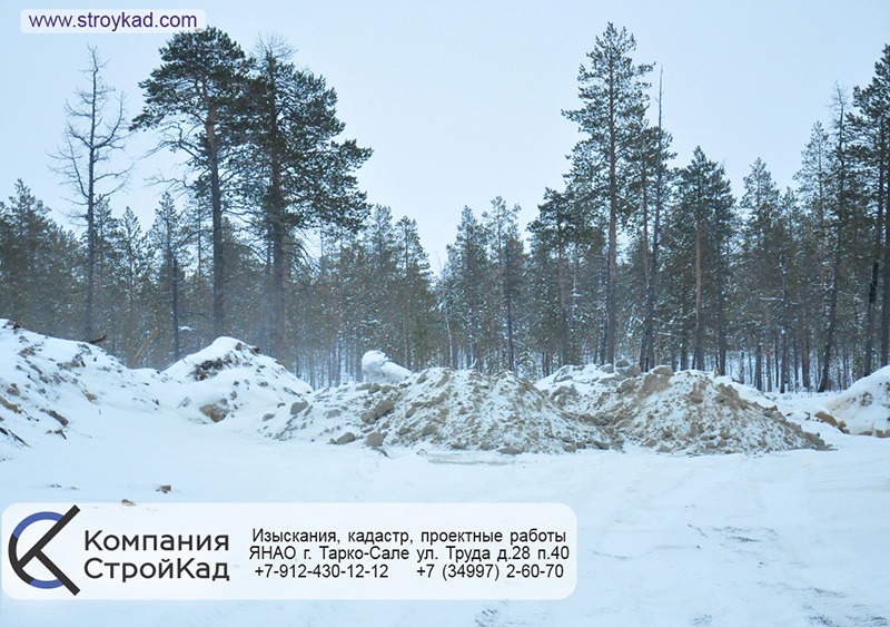 Проекты лесовосстановления