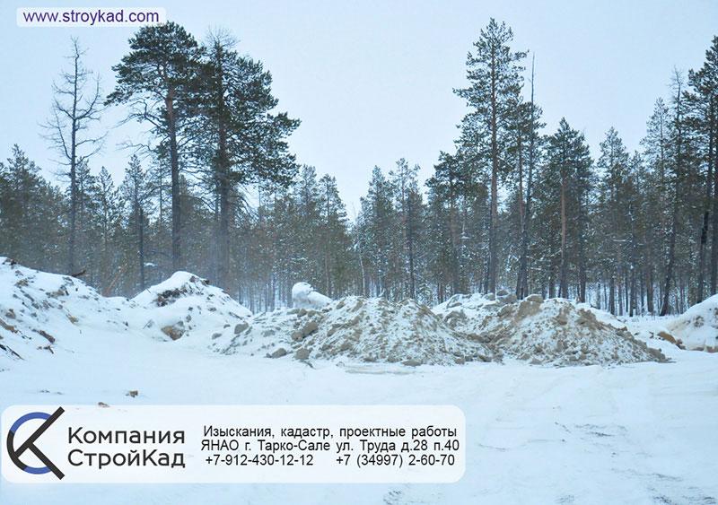 проект лесовосстановления